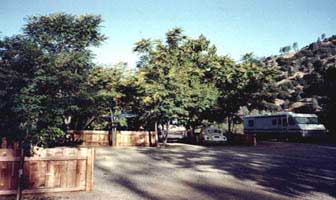 Trees throughout Bigfoot Campground.